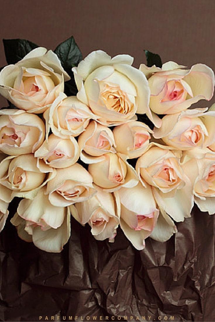 Rose Cream Yves Piaget