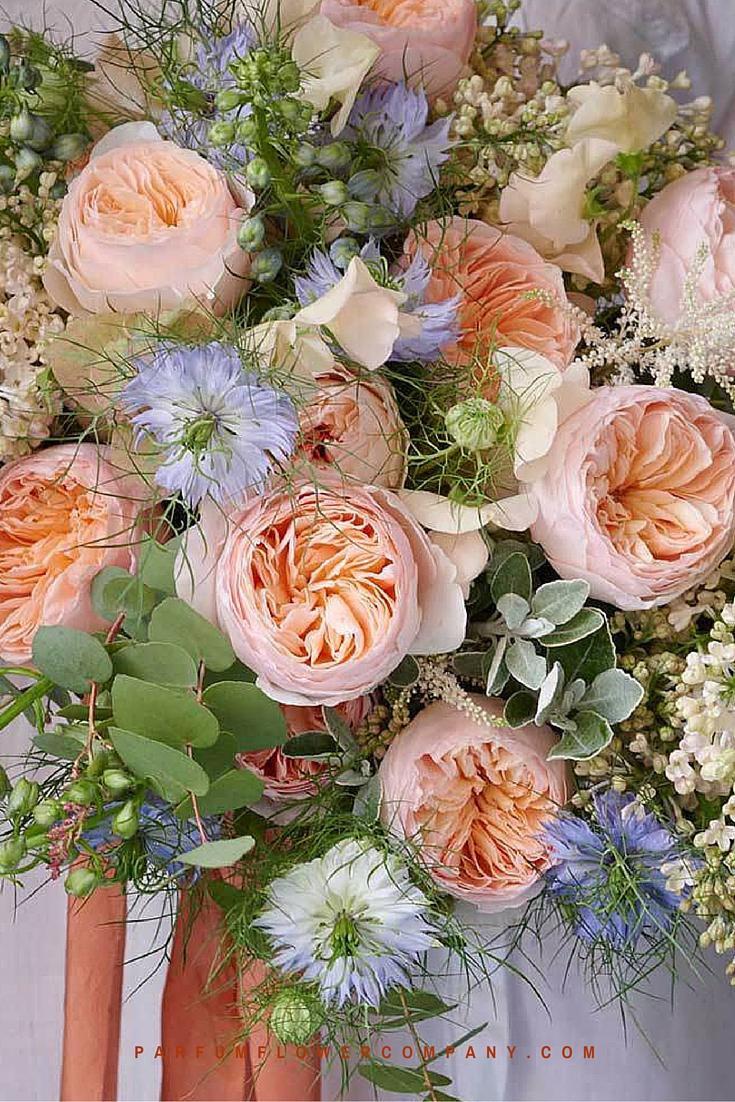 David Austin Wedding Rose Juliet
