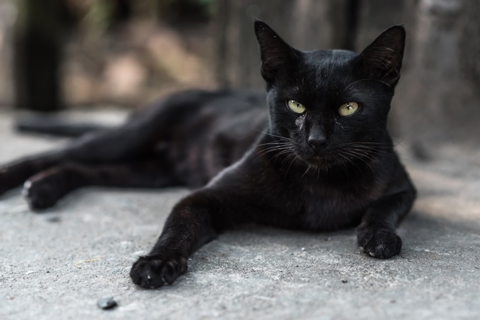 Cute Billi Wallpaper 3 Weird Superstitions We Believe In And The Reality Behind