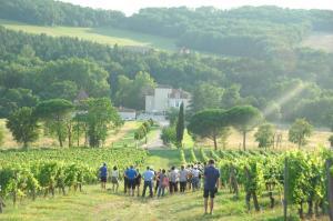 Les vignerons jouent la carte de l'oenotourisme - 10/06/2017 - ladepeche.fr