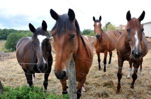 30 millions d'amis aide «Au bonheur des chevaux» - 09/08/2018 - PetitBleu.fr