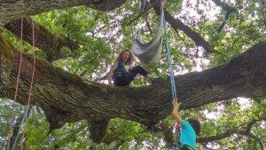 Trotte-lapin : Allons grimper dans l'arbre ! - 16/05/2019 - ladepeche.fr