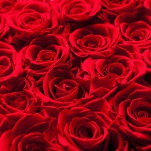 home rosenboxen und flowerbox