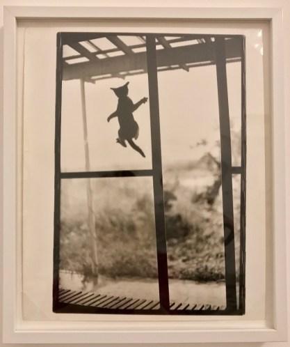 Masahisa Fukase, Cat © Isabelle Henricot