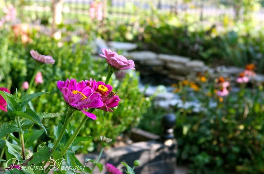 Mon Jardin et le fin d'été…