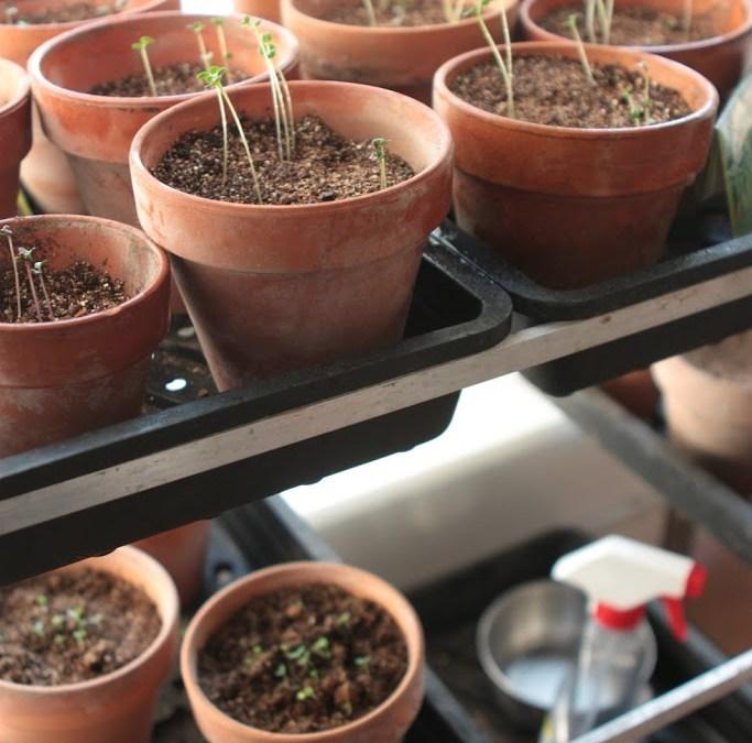 DIY Greenhouse | Parisienne Farmgirl