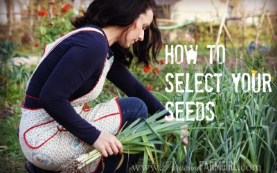 How to Select Your Seeds