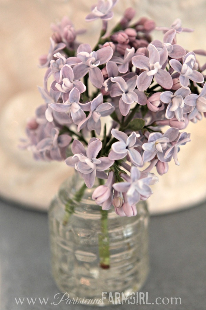 How to Cut Lilacs