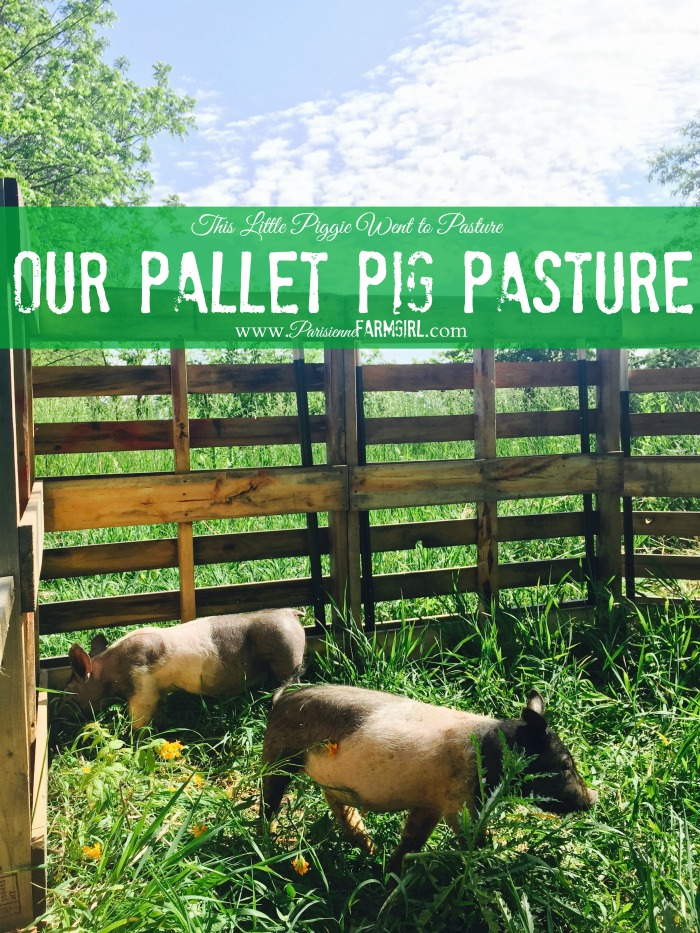 Our Pallet Pig Pasture
