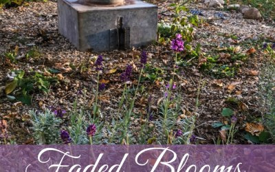 Fall Garden…November's Faded Blooms
