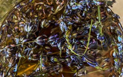 How to Make Lavender Infused Honey | Lavender Honey Latte Recipe
