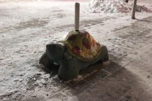 tortue frigorifee