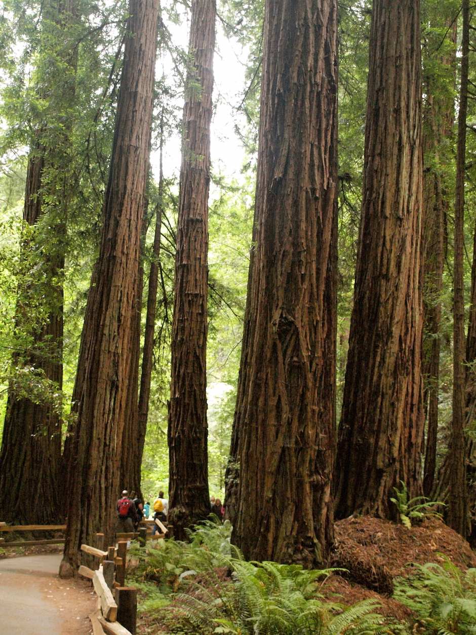 Muir Woods National Monument: Redwood Creek Trail