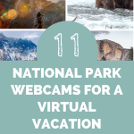 11 Best National Park Webcams for A Virtual Get-Away