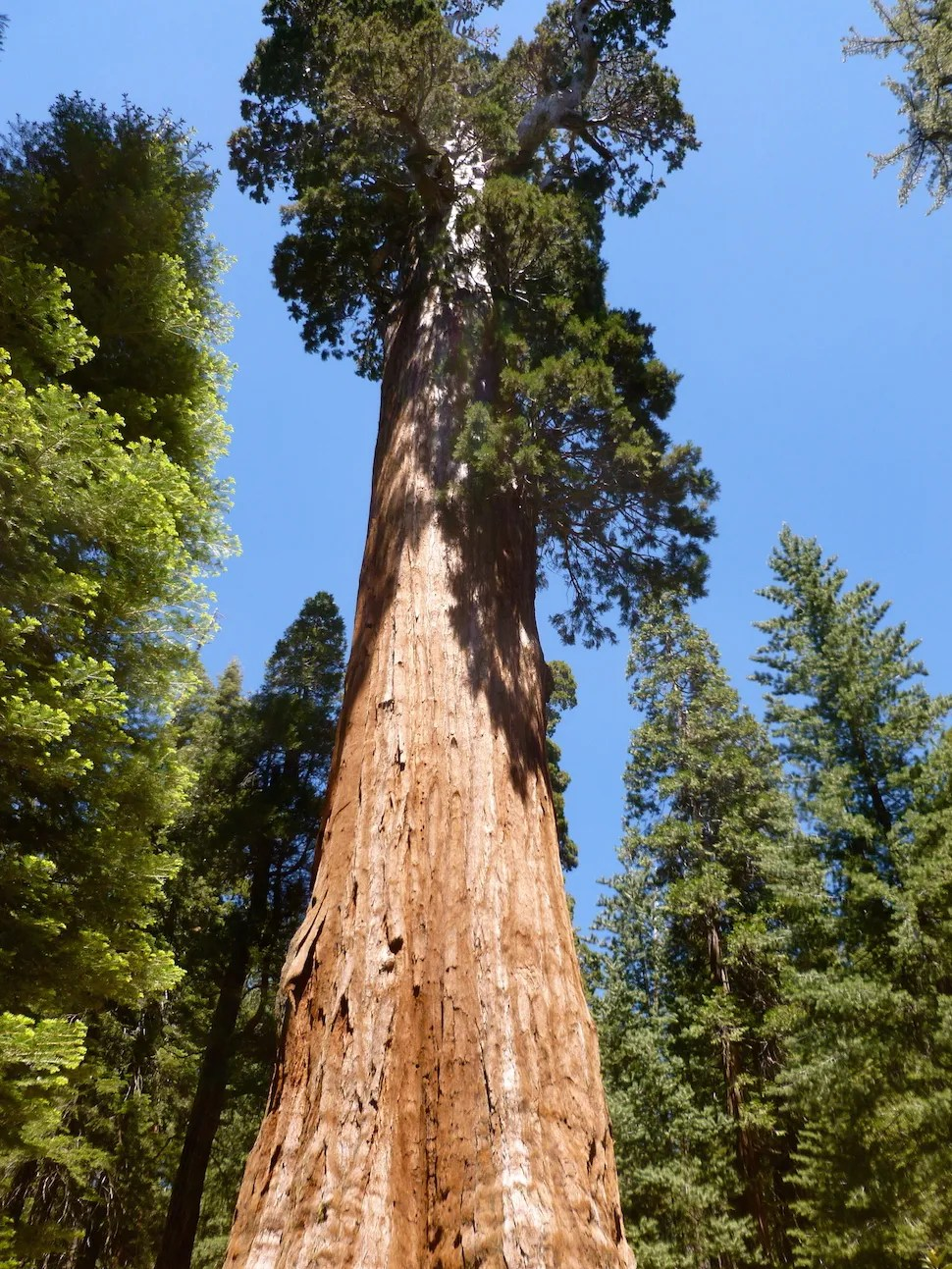The Best National Parks to See Gigantic Trees