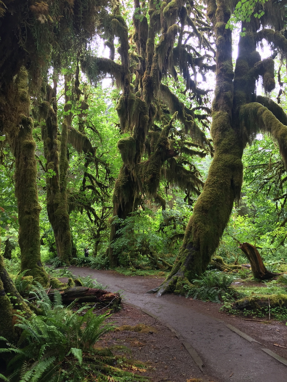 Olympic National Park: The Hoh Rain Forest - Hall of Mosses Trail