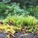 Hiking Olympic National Park: The Hall of Mosses Trail