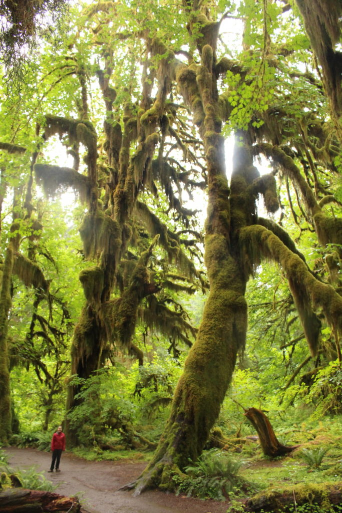 The Hall of Mosses Trail