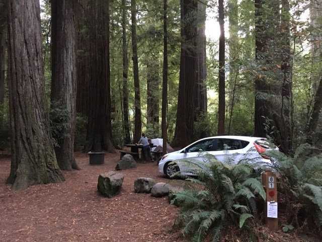 Campsite in Jedediah Smith Campground (old-growth redwood forest)