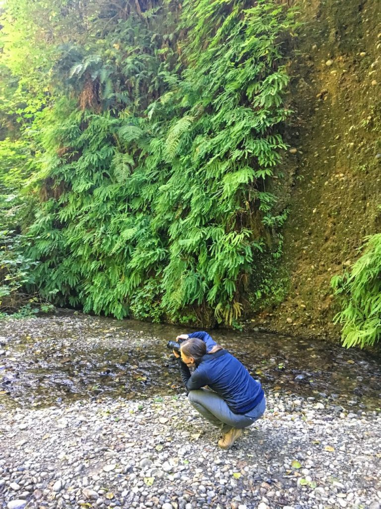 Photographing the Walls of Fern Canyon