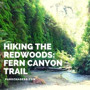 Hiking the Redwoods: Fern Canyon Trail
