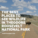 Best Places to See Wildlife in Theodore Roosevelt National Park