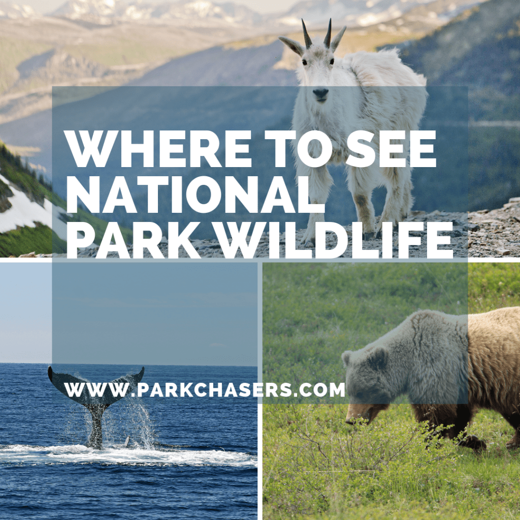Where to see National Park Wildlife
