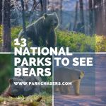 13 National Parks With Bears