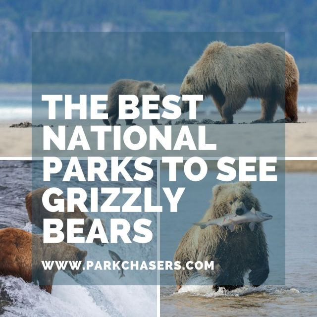National Parks wtih Grizzly Bears