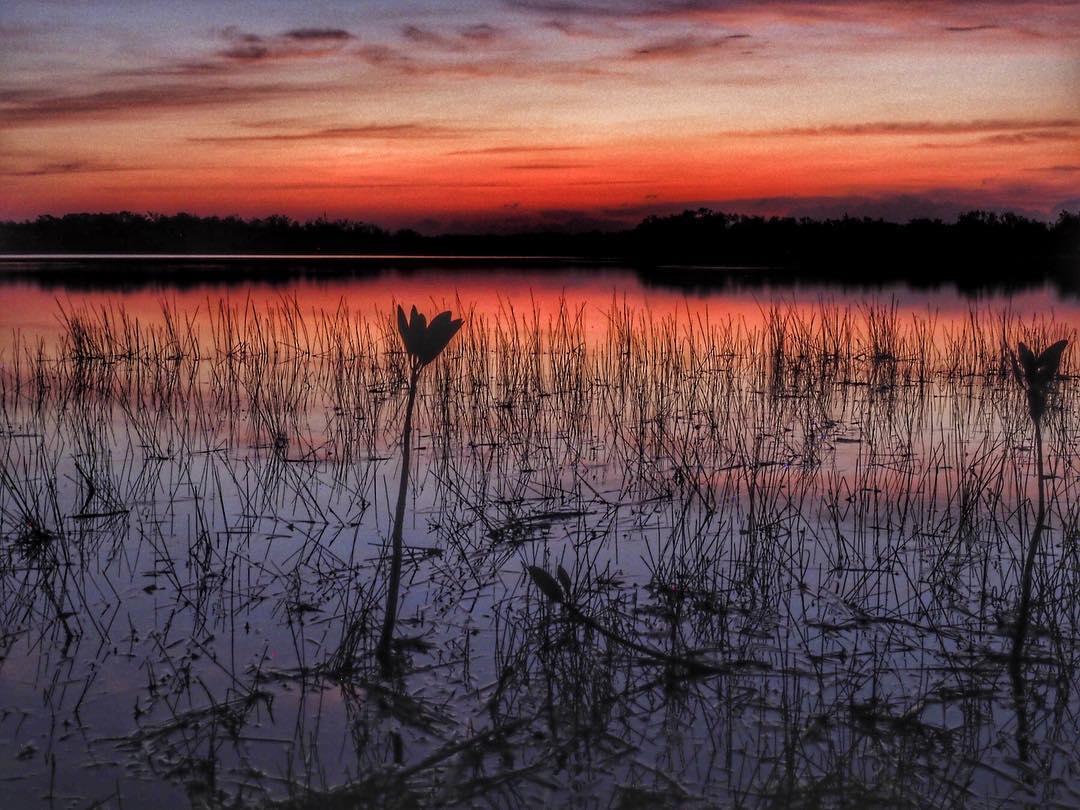 Sunrise in Everglades National Park - Sandra Ramos