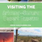 Visiting the Arizona-Sonora Desert Museum in Tucson