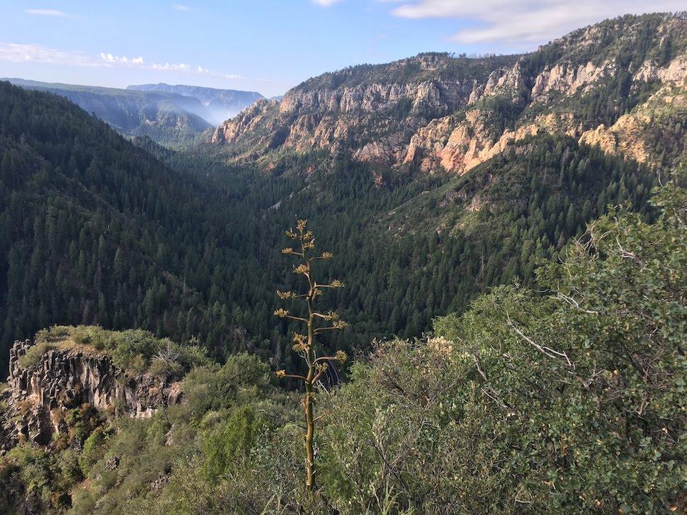 Oak Creek Canyon Overlook
