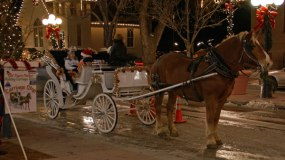 Carriage rides parker colorado