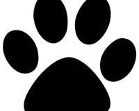 dog paw cat paw