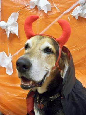 hound dog in halloween costume