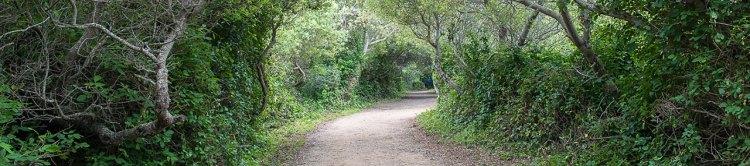 Headlands Trail