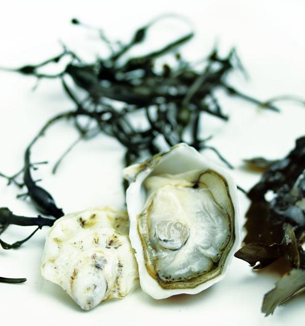 ostriche-prodotto-parliamo-di-cucina