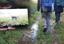 sulle tracce del lupo nel Parco del Taro e workshop sulle trappole con Io non Ho Paura del Lupo