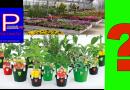 Si può andare al vivaio a comprare le piantine per orto o giardino?