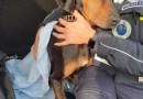 FORNOVO, lascia i suoi due cani chiusi in auto: scatta la denuncia grazie ad alcuni passanti
