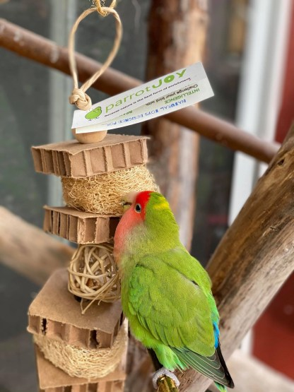 cardboard bird toy with parrot