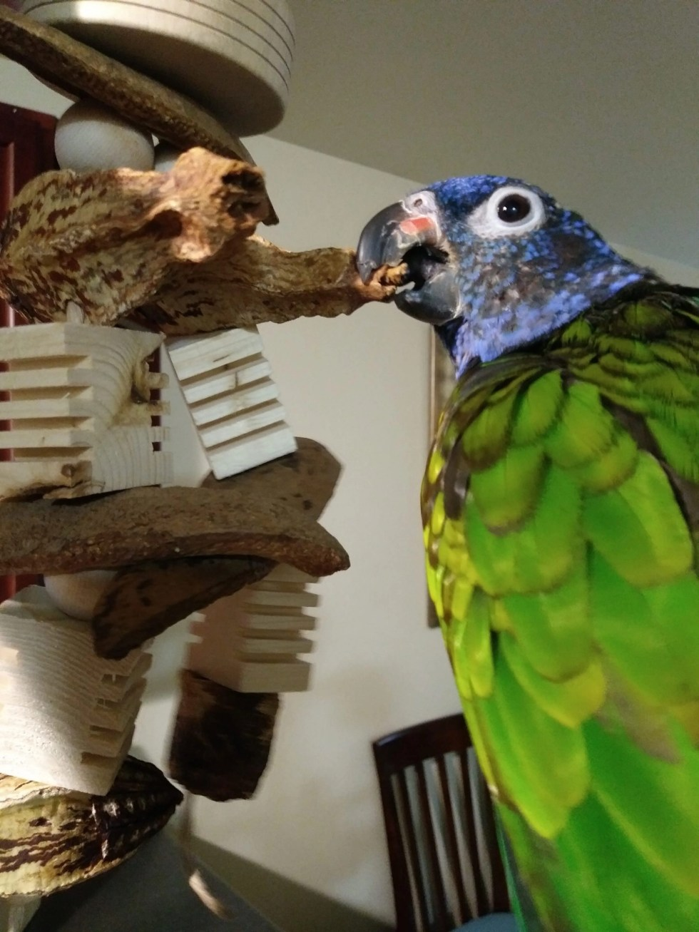 organic-bird-toys