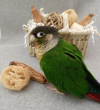 natural toy basket shown with parrot