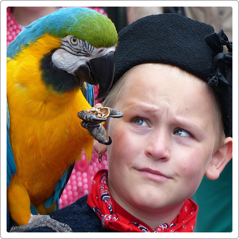 Golden-blue macaw parrot sitting on the shoulder of young boy with black cap