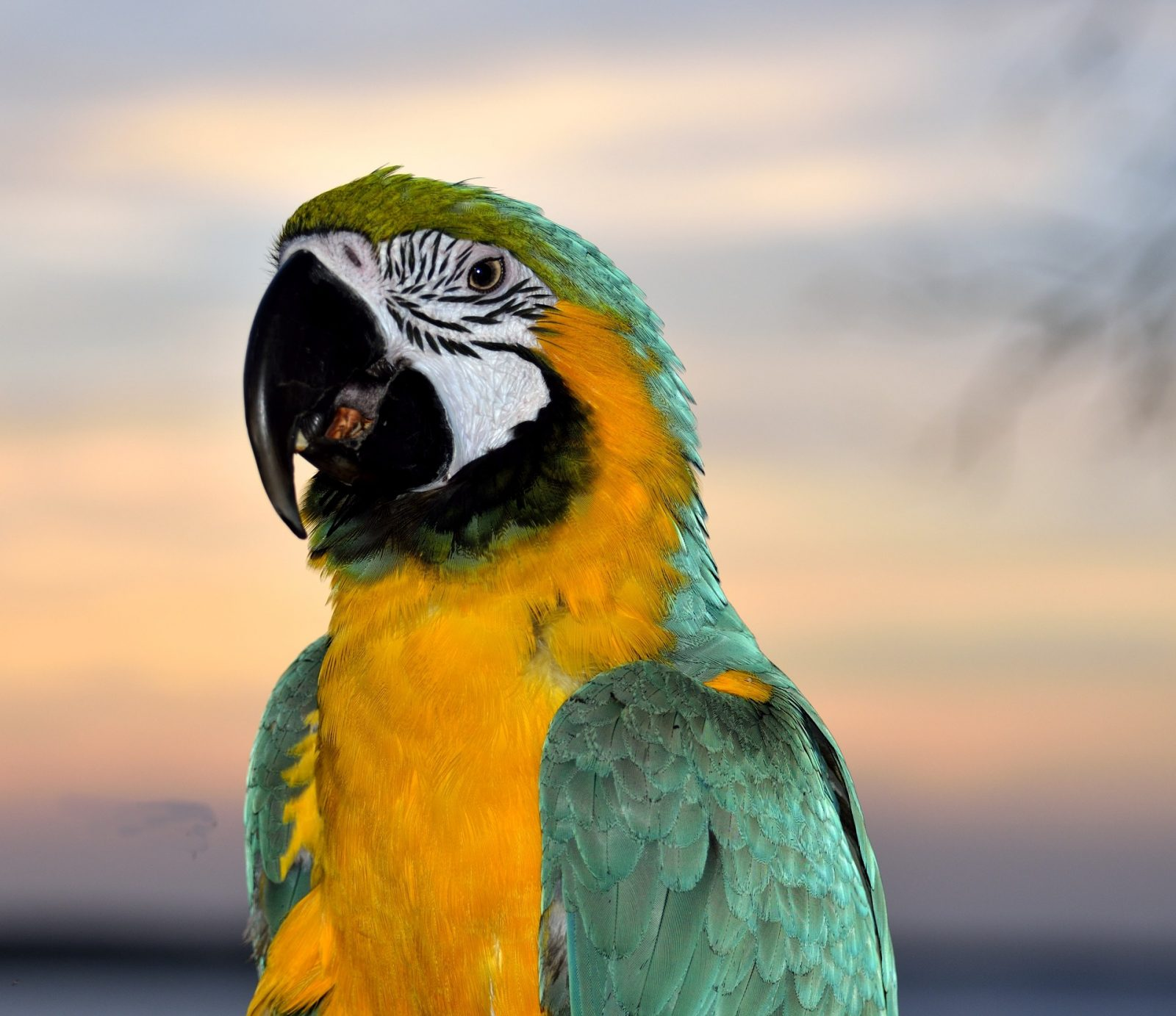 Are Parrots Cold Or Warm Blooded