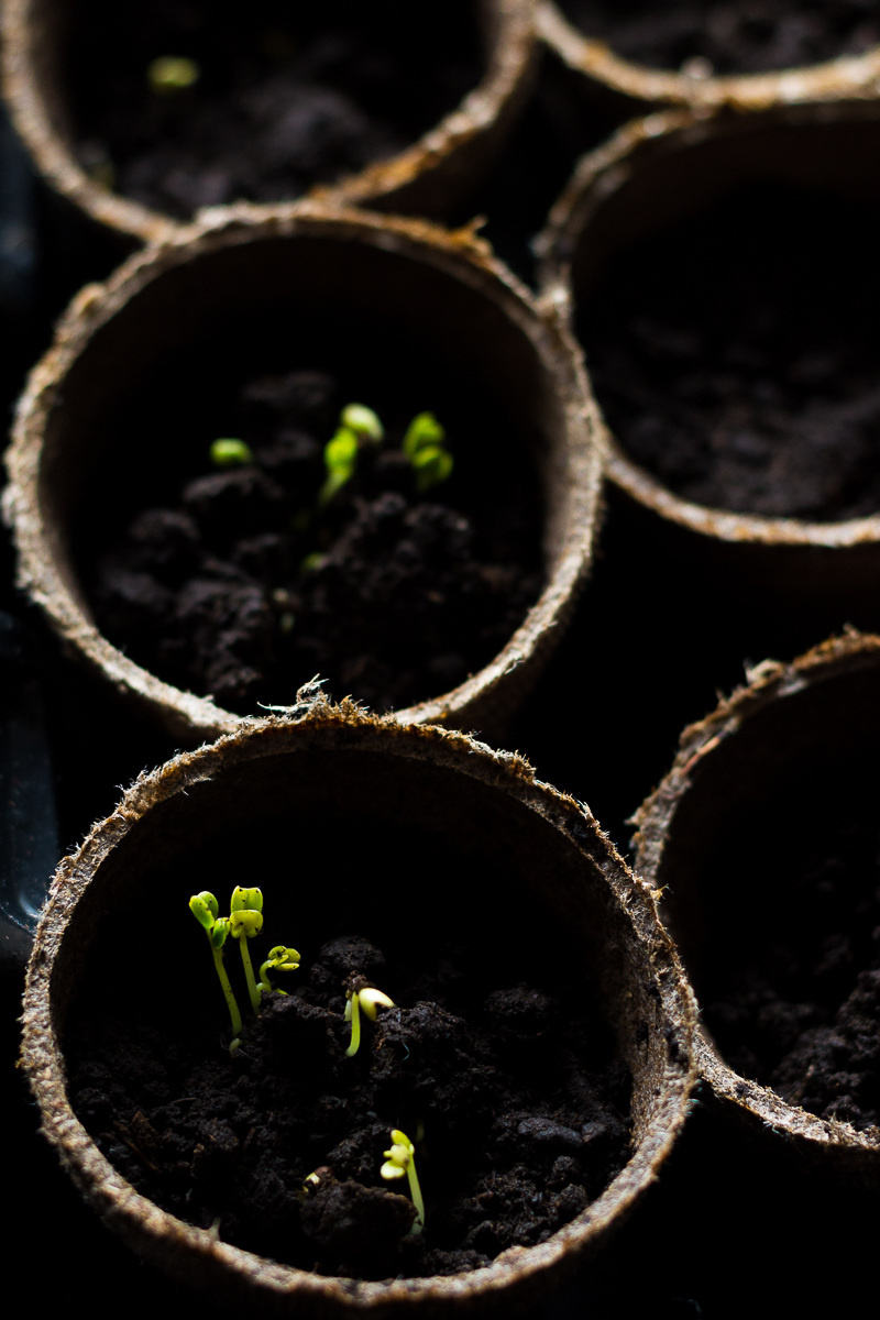 Starting Seeds Indoors | Gardening Series