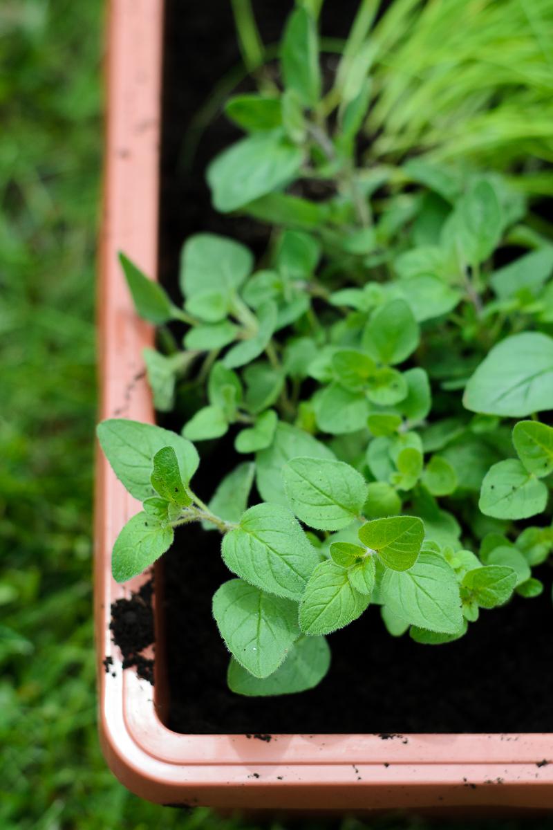 Planting Garden | Gardening Series