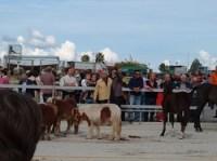 Fiera del bestiame