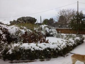 Neve a Partanna-Salvatore_Corrente