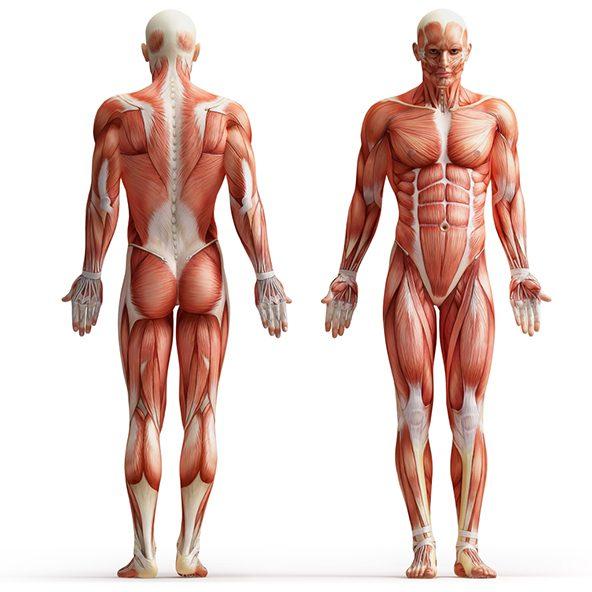 Chiropractic Conditions We Treat